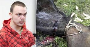 Umučil koně, kterého chtěl znásilnit: Úchyl z Českolipska dostal od soudu dva roky