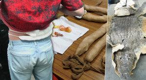 Kolibříci v rozkroku, krajty v nohavicích: I to jsou skrýše pašeráků