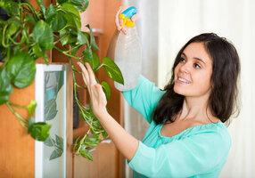 Pokojové rostliny zbaví vaši domácnost nebezpečných jedů: Které si pořídit?