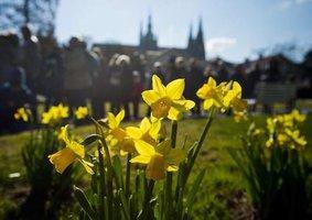 Jací jste podle vaší oblíbené jarní květiny? Zkuste náš test!