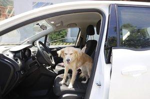Na dovolenou se psem? Do letadla v krabici, mimo EU jen s čerstvými testy