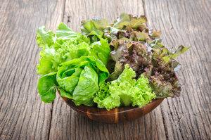 Je čas vysadit salát. Sklízet pak můžete už brzy na jaře!