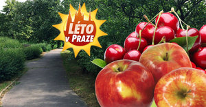 Praha rozdává ovoce zdarma: Natrhat si můžete třešně, jablka i mandle
