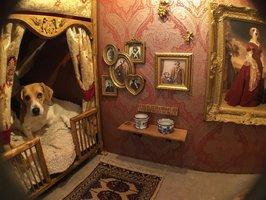 Neuvěřitelné psí boudy! Paláce, které lidé pořídili svým mazlíčkům