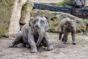 """Každý den o kilo těžší: Sloní """"kluk"""" Max roste před očima, rád jí a hraje si"""
