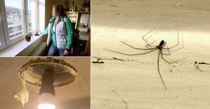 Výměna manželek: V nádražním domku panuje pavoučí teror! Zdenka to nezvládá