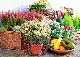 Divoká, krásná i užitečná: Jaký je rozdíl mezi tradiční a přírodní zahradou?
