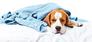 Nachlazený domácí mazlíček: 4 rady, jak pomůžete pejskovi od nemoci!