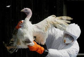 Ochranné pásmo proti ptačí chřipce. Veterináři ho vytvořili na jižní Moravě