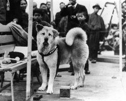 Skutečný příběh legendárního psa Hačikó: Po smrti páníčka ho 10 let vyhlížel