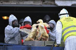 """Ptačí """"masakr"""" na Chebsku: Veterináři vybijí 30 tisíc ptáků"""