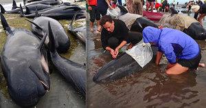 Přes 400 velryb umírá na Novém Zélandu, uvázly na pláži