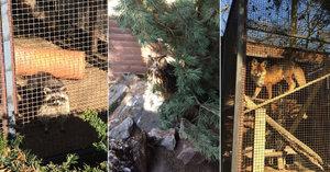 Znáte obyvatele Zookoutku Malé Chuchle? Ochočené lišky, hendikepovaný výr nebo mýval