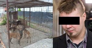 Držel jsem mu krček, mezi prsty mi proudila krev, plakal otec Mirečka (†5), kterého roztrhali psi, u soudu