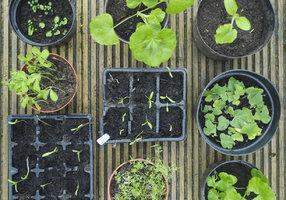 Jarní výsev doma i ve skleníku. Na co si dát pozor?