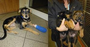Týrání psů v Praze: Jeden byl uvázaný u stromu, další trpěli u bezdomovce