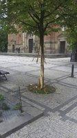 Radnice Prahy 5 řeší zvláštní případ vandalství: Kvůli zničenému stromu oslovila policii