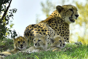 Křtiny v pražské zoo: Gepardí paterčata dostala jména