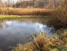 Kvalita vody v Praze se zlepšuje: Město pravidelně kontroluje rybníky i potoky