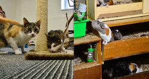 Měla se o ně s láskou starat, místo toho je opustila: Zvířata z bytu v Odoleně Vodě poputují do útulku