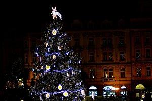 Hledá se letošní král Vánoc. Pomozte i vy najít nejideálnější strom pro Staroměstské náměstí