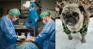 Český neurochirurg pomáhá zachraňovat i zvířata: Operuje mozky psům