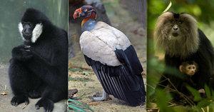 Ostravská zoo chystá velké investice: Za 120 milionů postaví pavilon pro kondora, gibony a makaky