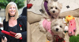 Barbra Streisand si nechala naklonovat zesnulého psa. Dostala hned dvě kopie