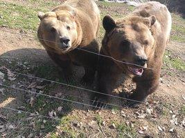 Jaro začíná, v plzeňské zoo se probudili brtníci: Ve spánku medvědi shodili třetinu své váhy