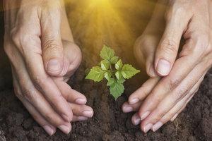 Duben na zahradě: Poslední šance zasadit ovocné stromky!