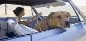Na dovolenou se psem: Nezapomeňte na průkaz, očkování a repelenty