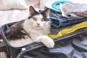 Cestování s kočkou autem: Nepodceňte přípravu a pozor na přehřátí