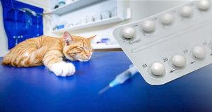 """""""Může je to zabít."""" Majitelé ládují kočky antikoncepcí a ibalginem"""