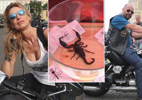 Nejdrsnější bitka, sexy ženy a 110 tisíc lidí: Tohle jsou nejlepší okamžiky motorkářských oslav!