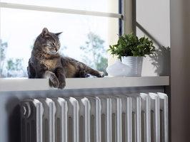 Jak skutečně pomoci domácím zvířatům, když je příšerné horko