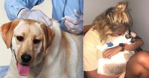 Poslední chvíle domácích mazlíčků před smrtí: Veterináři prozradili, co se se zvířátky děje