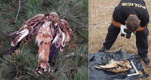 Na jihu Moravy někdo tráví chráněné dravce: Jiní dva byli nalezeni v Čechách