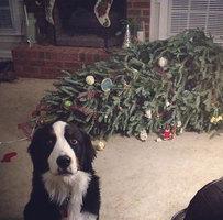 Takhle vypadají skutečné Vánoce se zvířátky: Připravte se na katastrofy i obrovské dojetí!
