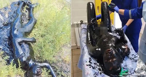 Muž spadl v Rusku do jezírka plného asfaltu: Seškrabávali ho z něj žiletkami