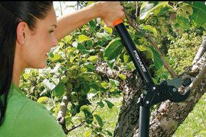 Škola prořezu stromů: Jak vytvarovat korunku?