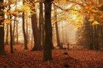 Dean Forest, hrabství Gloucestershire, Anglie