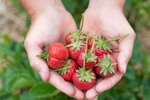 Červená dieta: Jezte hlavně jahody, rajčata a melouny