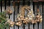 5 tipů, jak sklízet a uskladnit cibuli, aby vydržela celou zimu