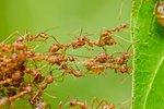 7 tipů, jak zatočit s mravenci! Zkuste účinný domácí jed nebo osvědčené babské rady