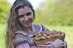 Vlašské ořechy: Sbírejte, sušte, zavařujte a hlavně jezte! Jsou velmi zdravé!