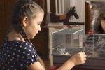 Kruté vánoční video: Domácí mazlíček může zahřát nejen u srdce
