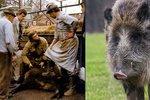 Změny 2016: Špatná zpráva pro prasata, dobrá pro milionáře