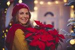 Vánoční hvězda může vydržet mnohem déle než jen do Vánoc. Jak vybrat tu správnou a jak ji pěstovat, aby vykvetla i další rok, když mnohým z nás doma nevydrží ani do Štědrého dne? Listy jí opadají. Poradíme vám, jak se o ni postarat, aby vydržela krásná po celé vánoční svátky.Aby vám vánoční hvězda vydržela opravdu dlouho, je potřeba ji pečlivě vybrat. Sebelepší péče totiž nezachrání rostlinu, která nebyla v pořádku už při nákupu.Více na http://www.blesk.cz/clanek/radce-zdravi-a-zivotni-styl-zivotni-styl/186726/jak-se-starat-o-vanocni-hvezdu-aby-vydrzela.html?utm_source=blesk.cz&utm_medium=copy