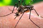 Epidemie horečky dengue v Keni. Nákaza se potvrdila u více než 100 lidí