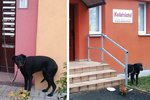 Nechtěné dárky: V Mostě psa uvázali ke schránce